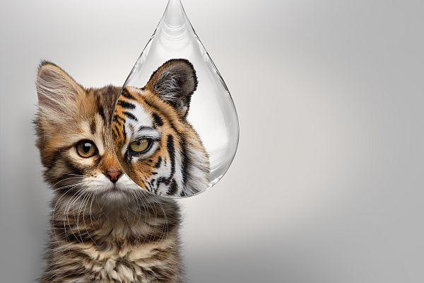Bronhopneumonia parazitară la pisică